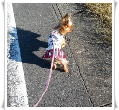 散歩IMG00406-20151201