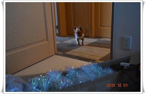 クリスマス準備DSC_0400-20151201