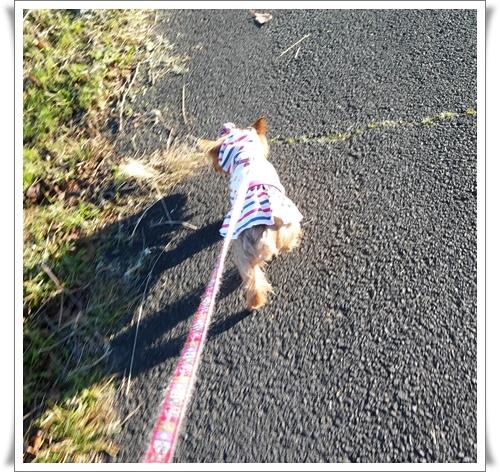 散歩IMG00438-20151208