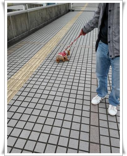 名古屋港IMG00128-20160117