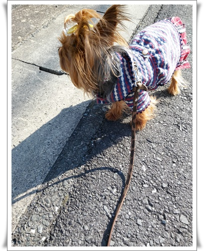 散歩IMG00150-20160126