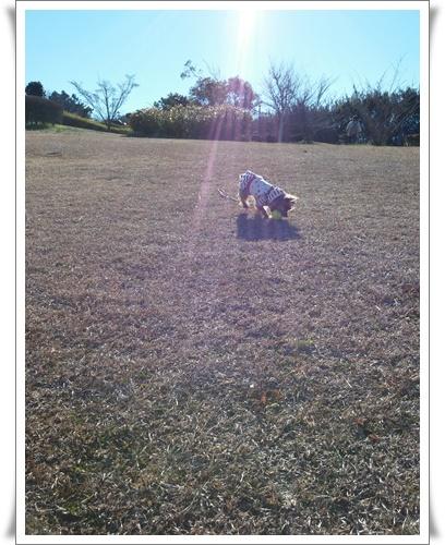 公園見つけたIMG00258-20160207