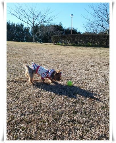 公園見つけたIMG00261-20160207