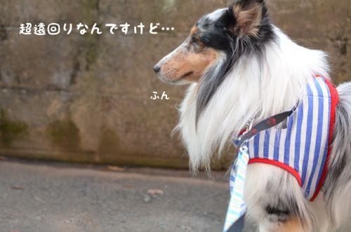 IMG_7632.jpg