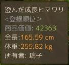 1月14日畑のひまわり3