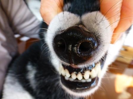2016歯石除去14