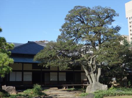 旧岩崎邸庭園 (5)