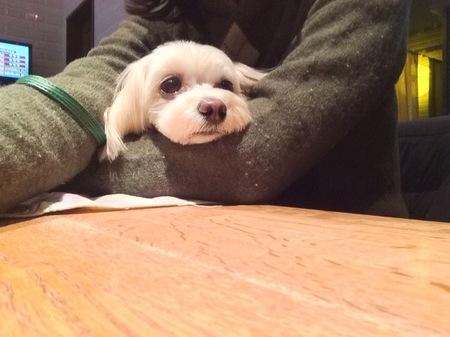 毛玉セーター