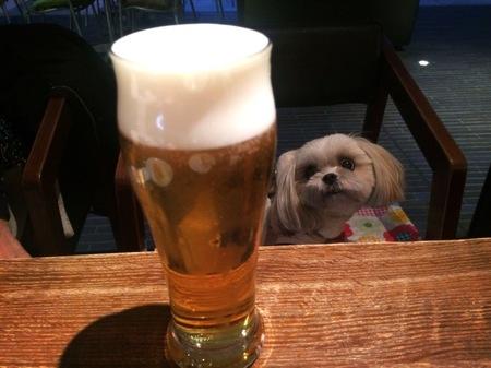 ビールとまめちゃん