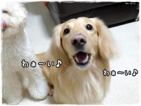 20151226014126.jpg