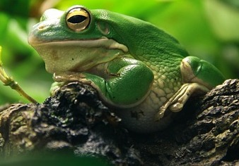 frog0.jpg