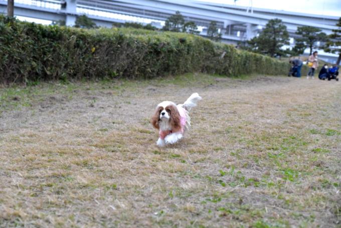 blog_DSC_2660.jpg