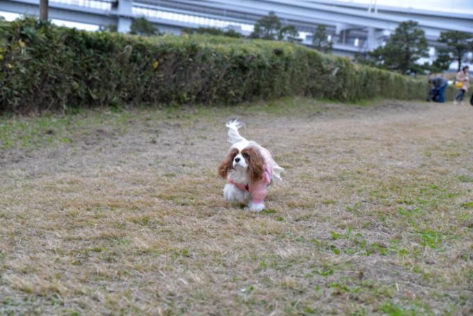 blog_DSC_2661.jpg