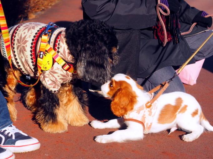 blog_blog-P2011362.jpg