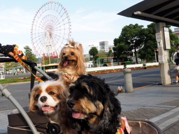 blog_blog_P9237433.jpg