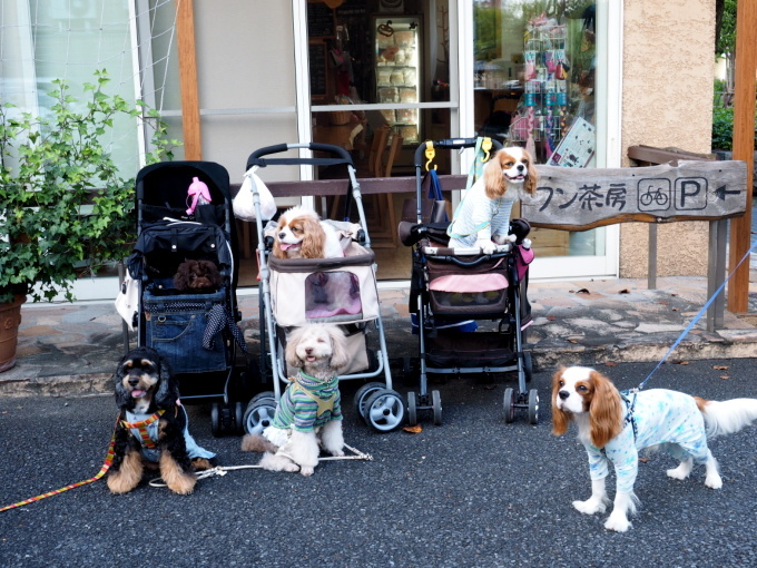 blog_blog_P9277925.jpg