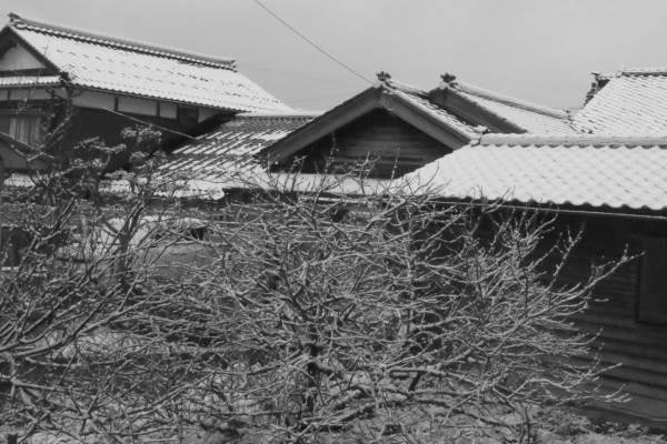 20160122_snow.jpg