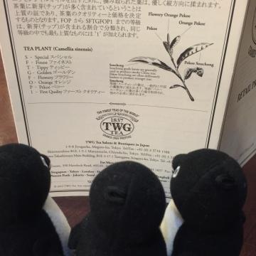 20160206-TWG (3)