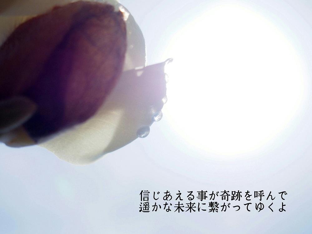 信じあえる事が(ハクモクレン)-1000