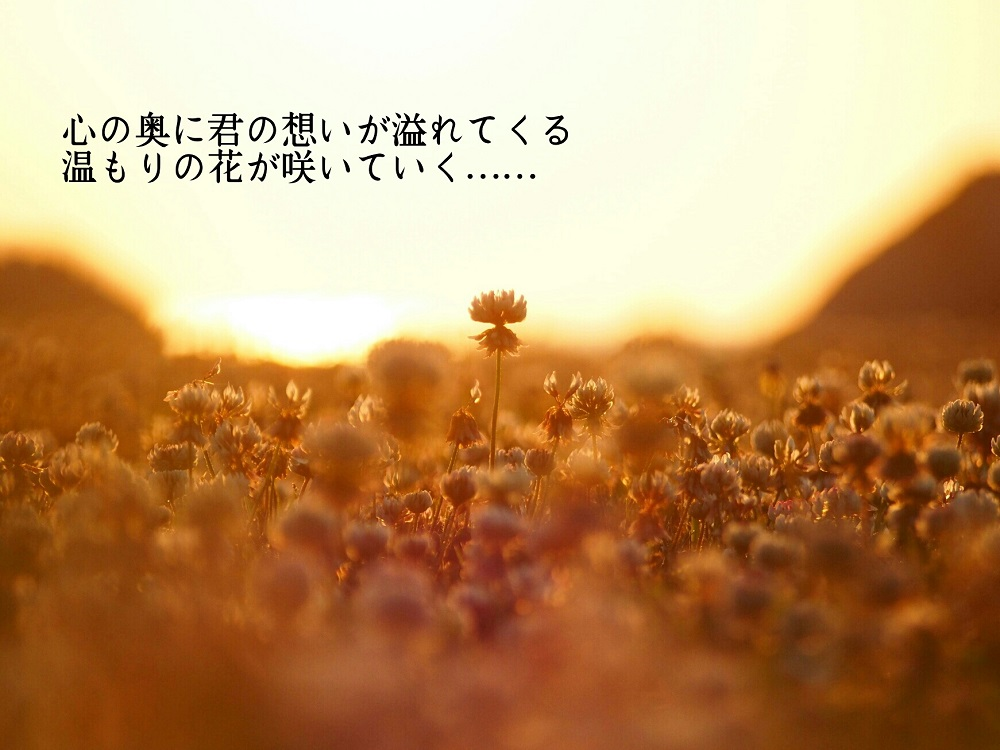 心の奥に(シロツメクサ)-1000