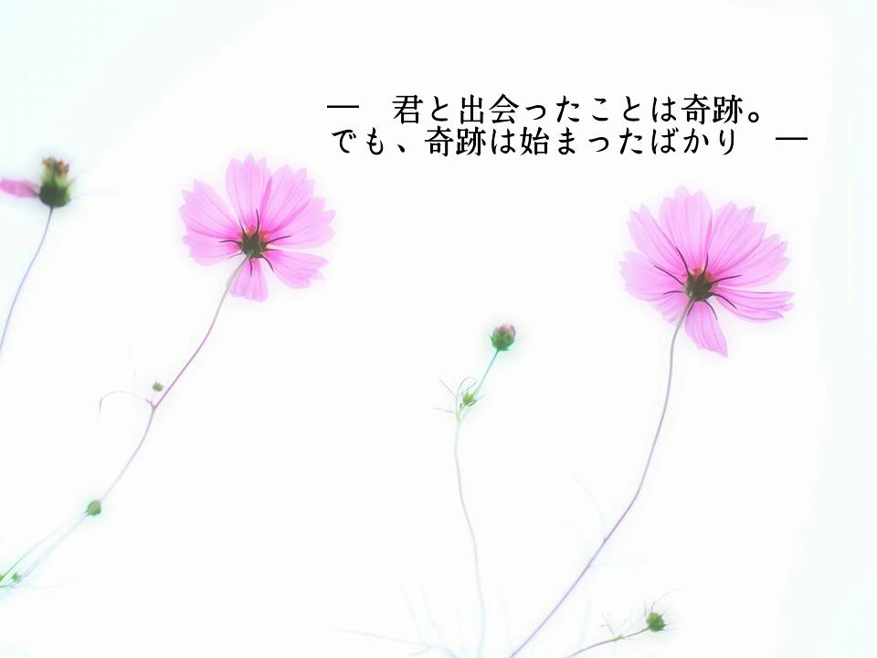 君と出会ったこと(秋桜)