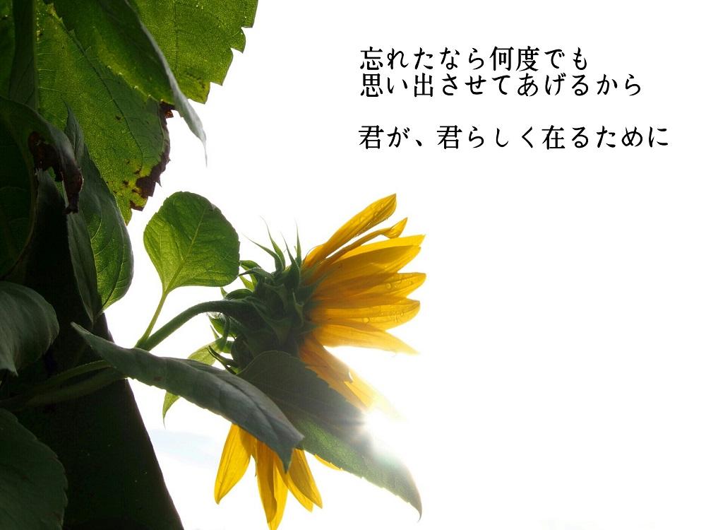 忘れたなら(ヒマワリ)-1000