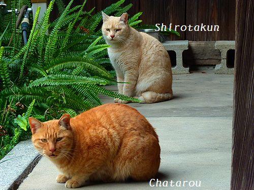 chichibi5_20160105115144ce1.jpg