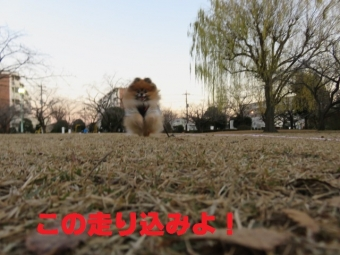 公園 007