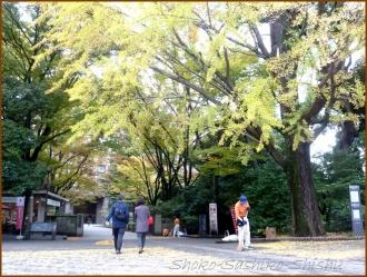 20151216 銀杏 3  銀杏と山茶花