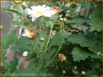20151220  花 4 冬の盛り合わせ