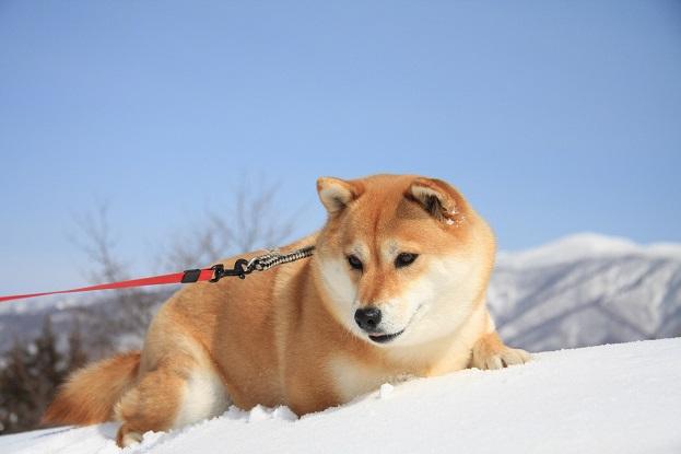 21 2月22日 雪遊び 040