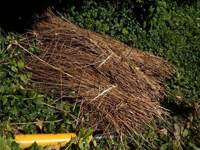 刈り取られたアンペライ