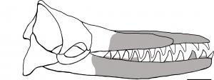 Albicetus oxymycterus