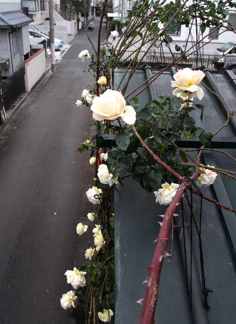 12月23日 屋根の上の巨大輪(2)