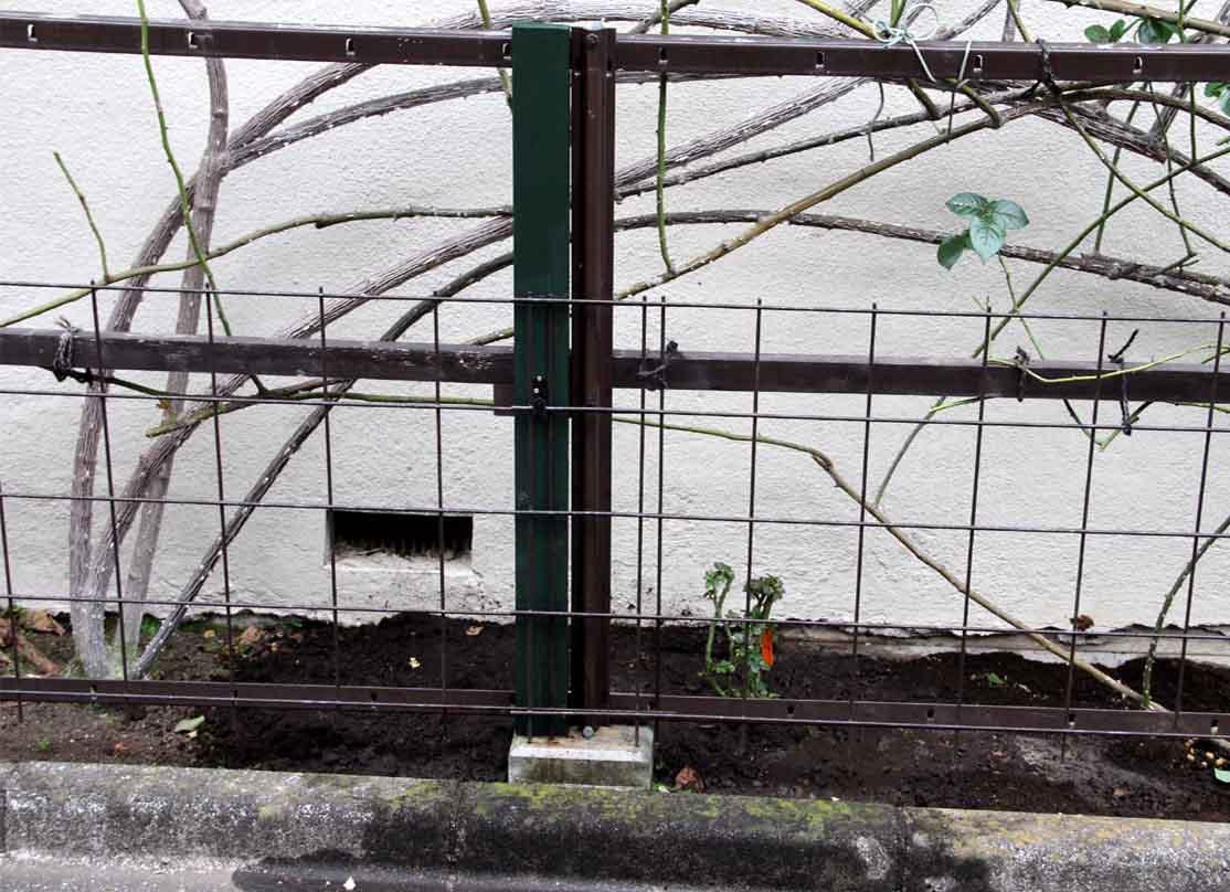 大苗の植え付け(5)