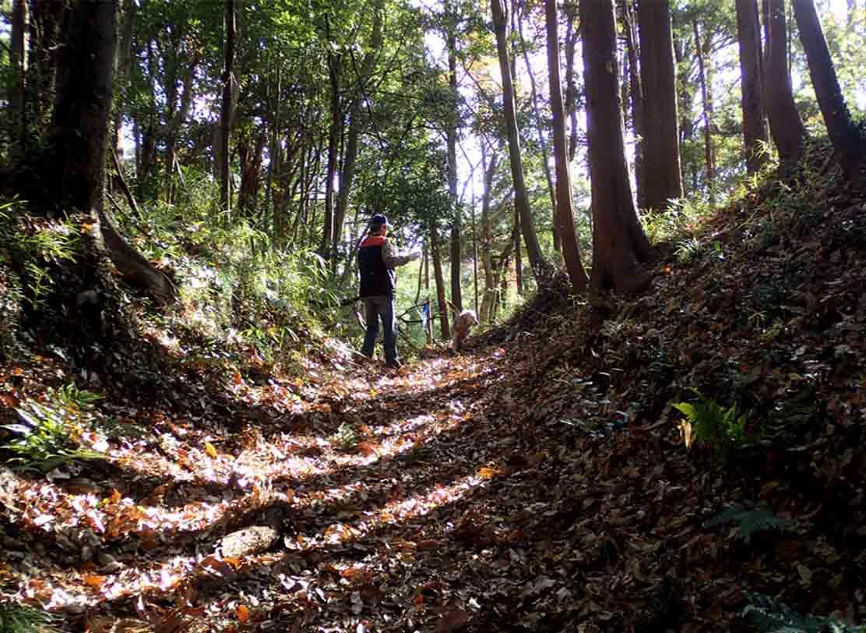 千葉の裏山でトレーリング訓練(2)