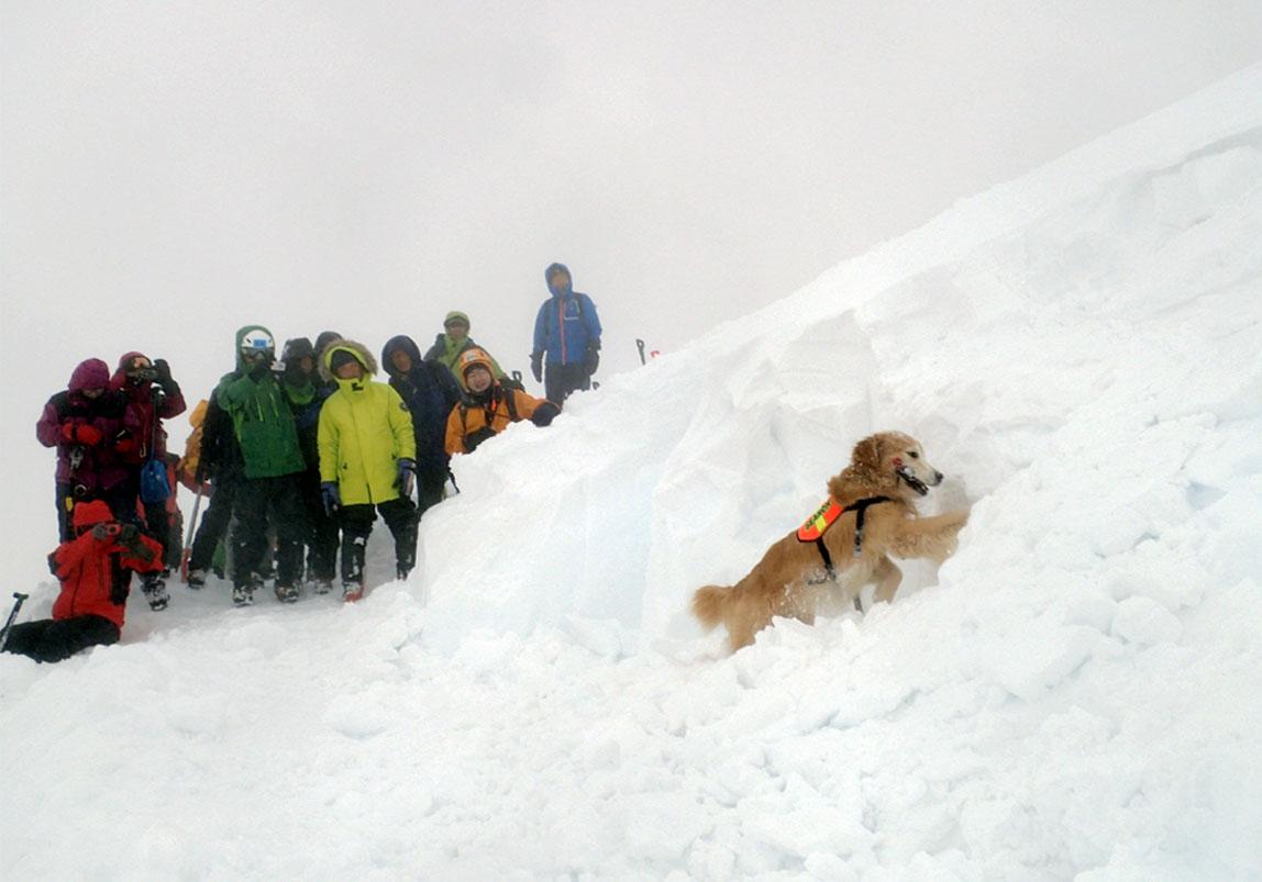 全国雪崩 2016 (4)