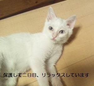 白 SBSH0747