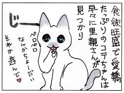 幸せ掴んだコテちゃん2-1