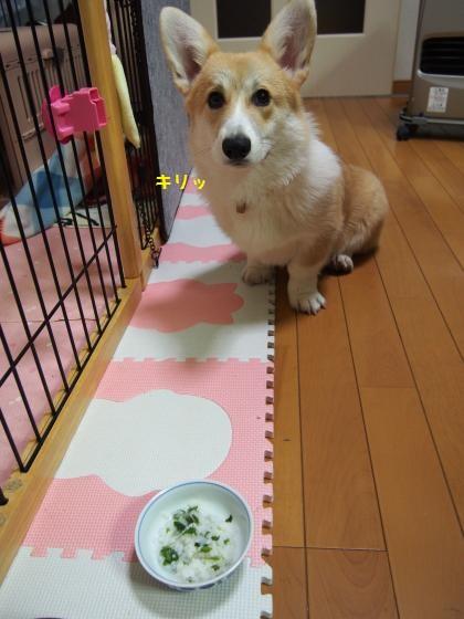 七草粥まつ芹ちゃん