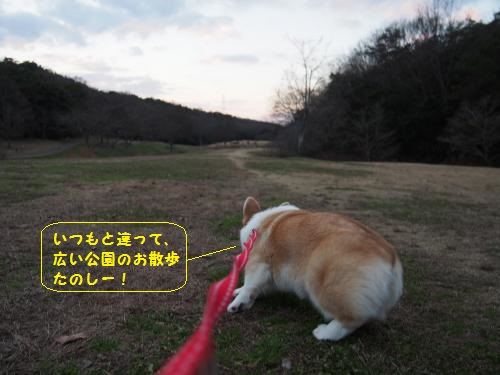 森林公園やるきな芹ちゃん