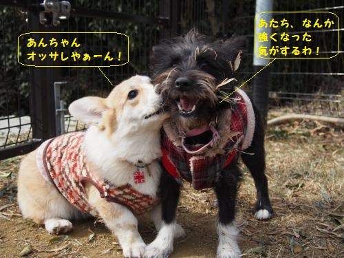 おっされ~なあんちゃん