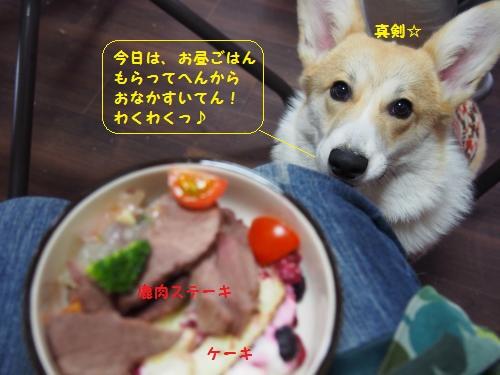 お肉ちょぉだい!