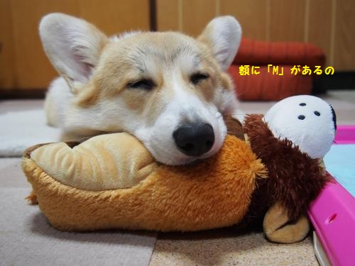 かえらし~寝顔