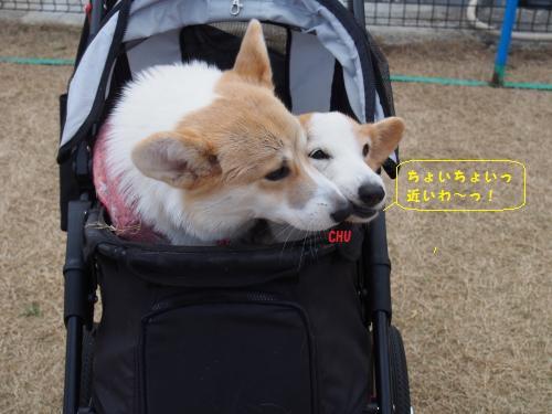 ちゃこちゃんカート1