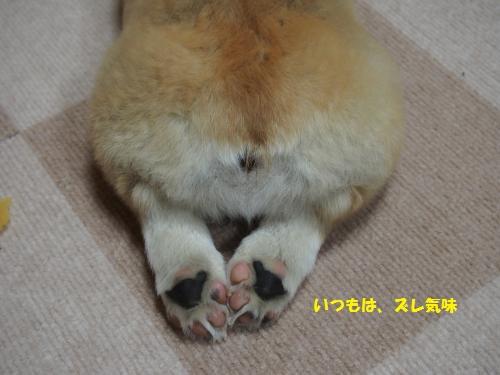 せりちゃんのズレた足