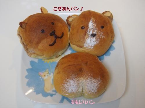 ぷいしぇふのこぎパン