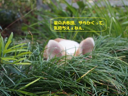 草のおふとん大好き