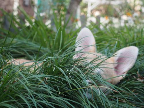 草のおふとんうもれてまふ