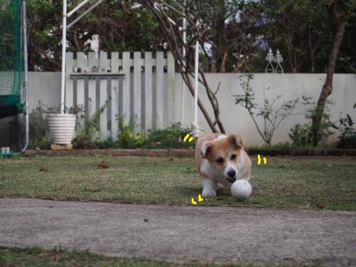 お庭でダッシュ